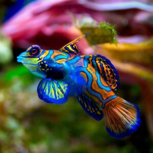 aquarium ro's from Pacific Water Technology-Keeping your fish happy!